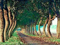 a road of the saint trees