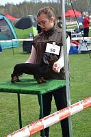 hunting dogs national show cac