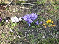 Spring and flowers